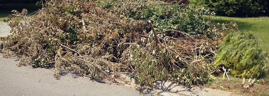 green waste dumpster